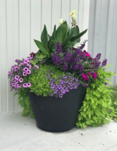 large flower pot full of purple flowers